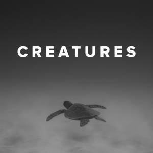 Sheet Music, chords, & multitracks for Worship Songs about Creatures