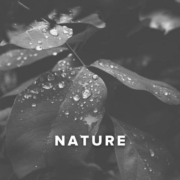 Sheet Music, Chords, & Multitracks for Worship Songs about Nature